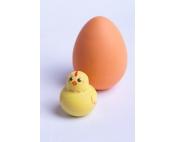 Цыпленок в яйце деревянная игрушка