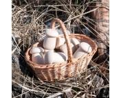 Счетный материал 12 боровичков в мешочке, неокрашенные